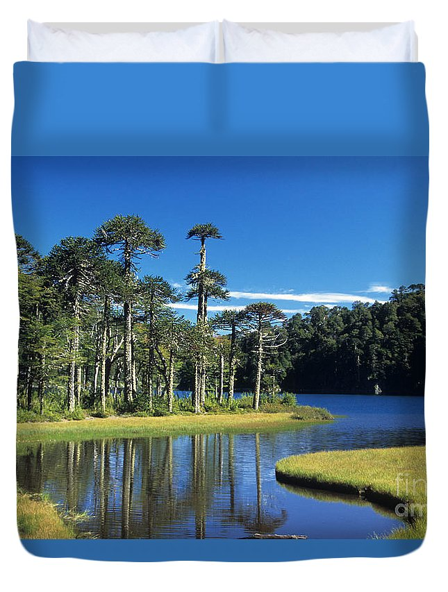 Chile Duvet Cover featuring the photograph Araucaria Forest Chile by James Brunker