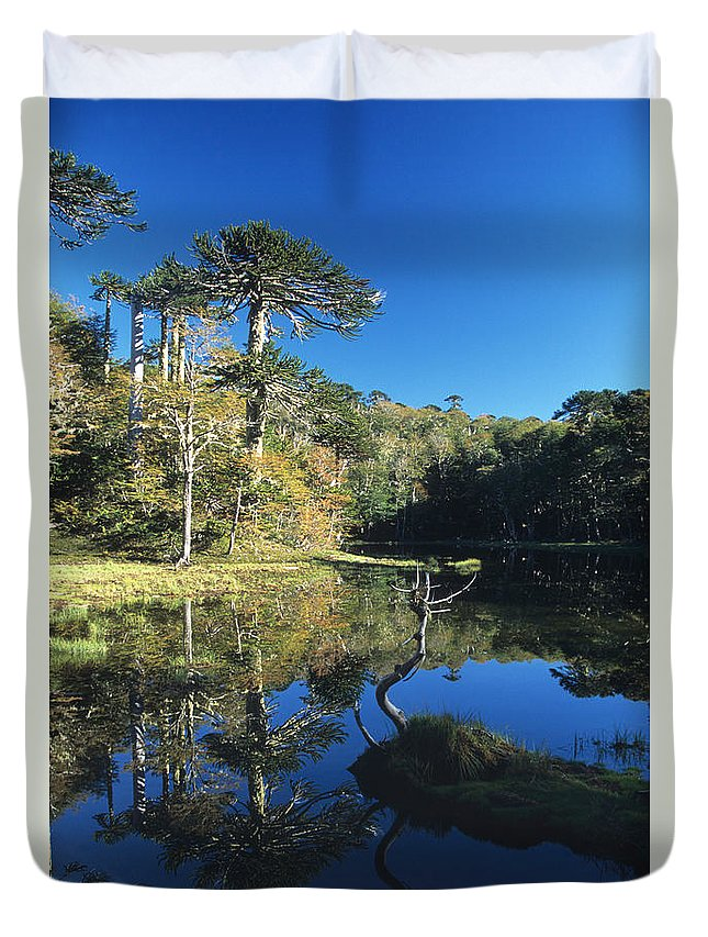 Chile Duvet Cover featuring the photograph Araucaria Reflections In The Chilean Lake District by James Brunker