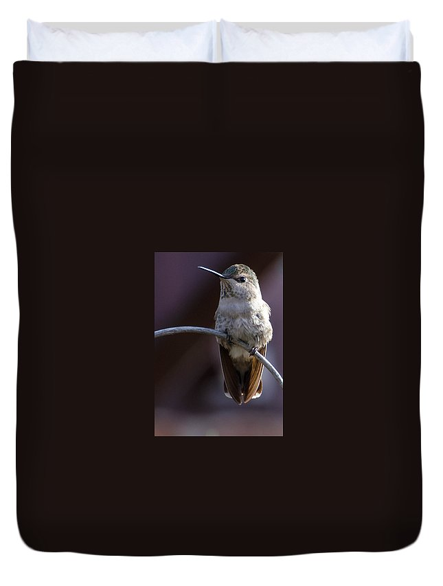 Hummingbird Duvet Cover featuring the photograph Archway Hummingbird by Michael Moriarty