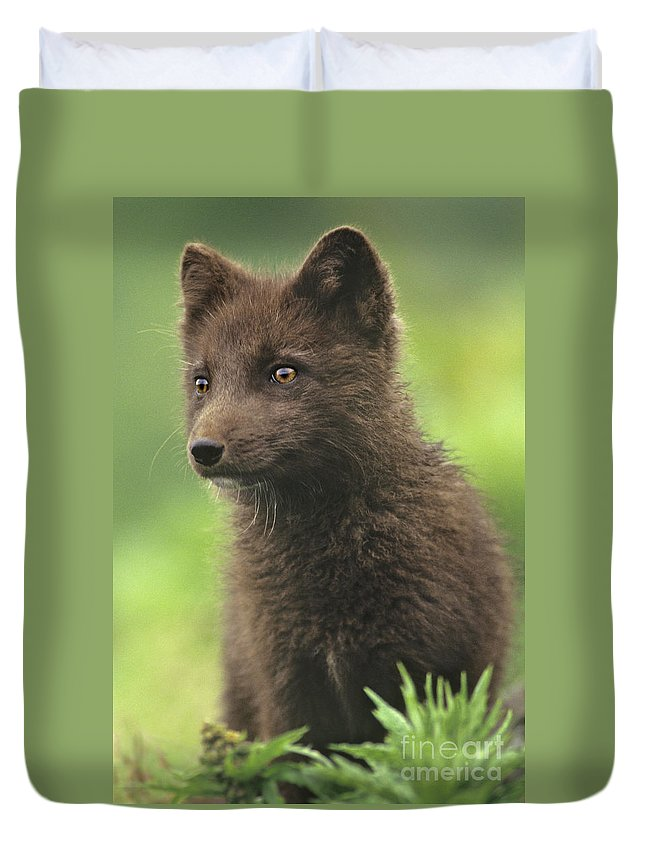 North America Duvet Cover featuring the photograph Arctic Fox Portrait Alaska Wildlife by Dave Welling