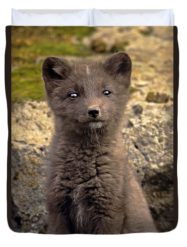 North America Duvet Cover featuring the photograph Arctic Fox Pup Alaska Wildlife by Dave Welling