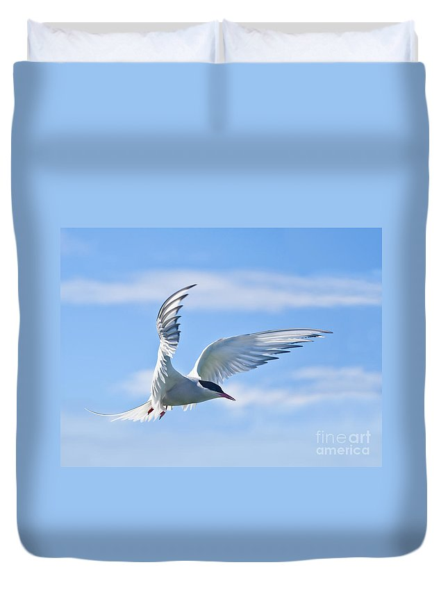 Arctic Tern Duvet Cover featuring the photograph Arctic Tern Sterna Paradisaea In Flight by Liz Leyden