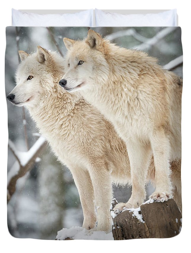 Snow Duvet Cover featuring the photograph Arctic Wolves Pack In Wildlife, Winter by 4fr