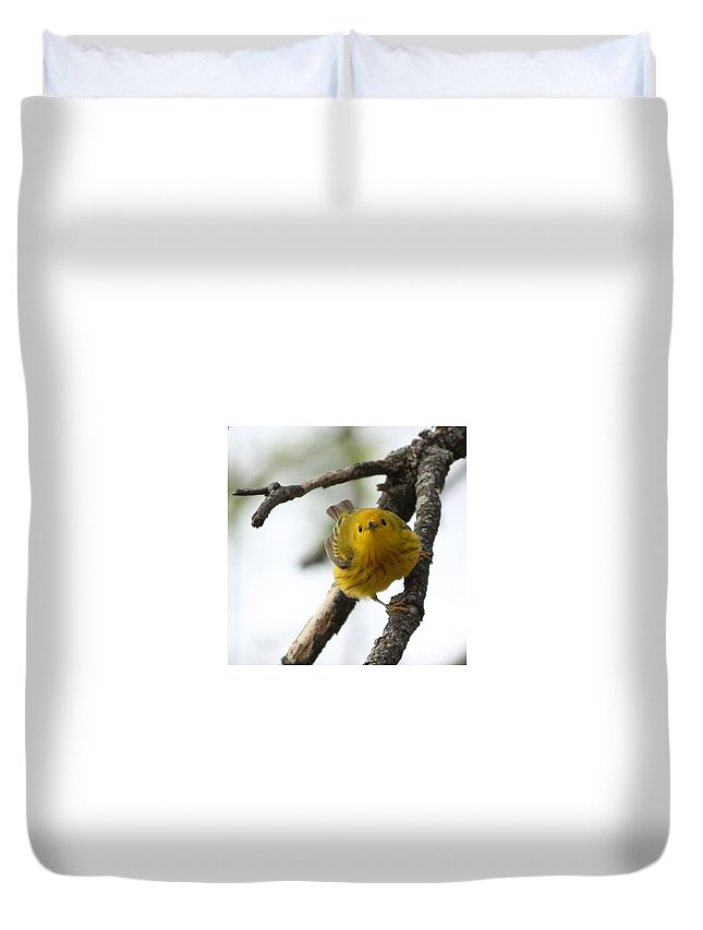 Yellow Warbler Duvet Cover featuring the photograph Are You Watching Me by Lori Tordsen