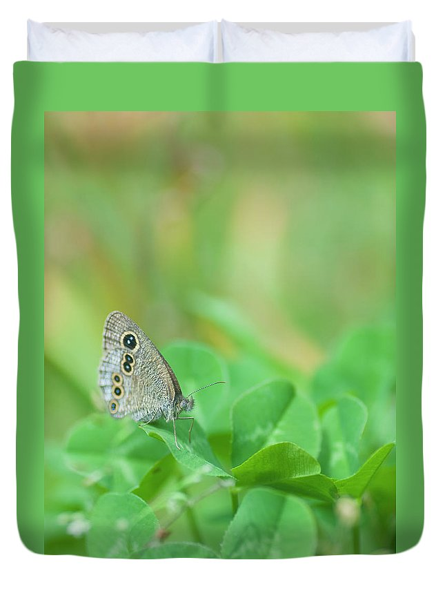 Insect Duvet Cover featuring the photograph Argus Rings Butterfly by Polotan