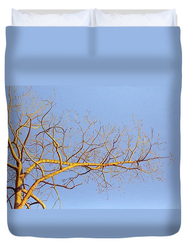 Aspen Painting Duvet Cover featuring the painting Aspen In The Autumn Sun by Elaine Booth-Kallweit