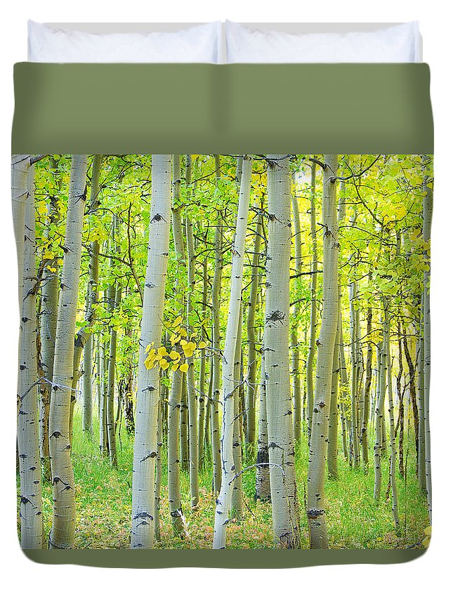 Aspens Duvet Cover featuring the photograph Aspen Tree Forest Autumn Time by James BO Insogna