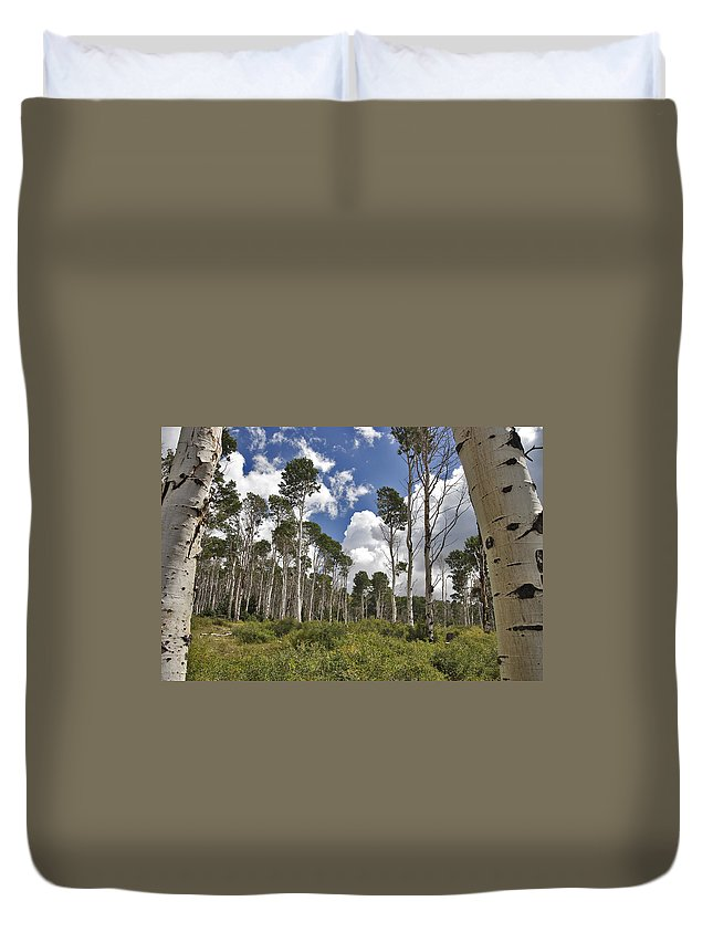 3scape Photos Duvet Cover featuring the photograph Aspen Grove by Adam Romanowicz