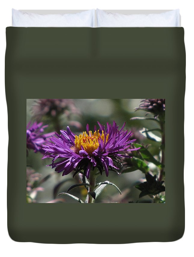Aster Duvet Cover featuring the photograph Aster by Jennifer Wheatley Wolf