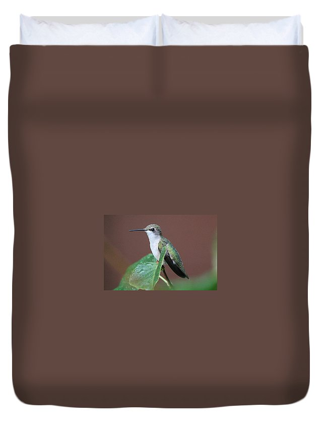 Bird Duvet Cover featuring the photograph At Rest by Paul Golder