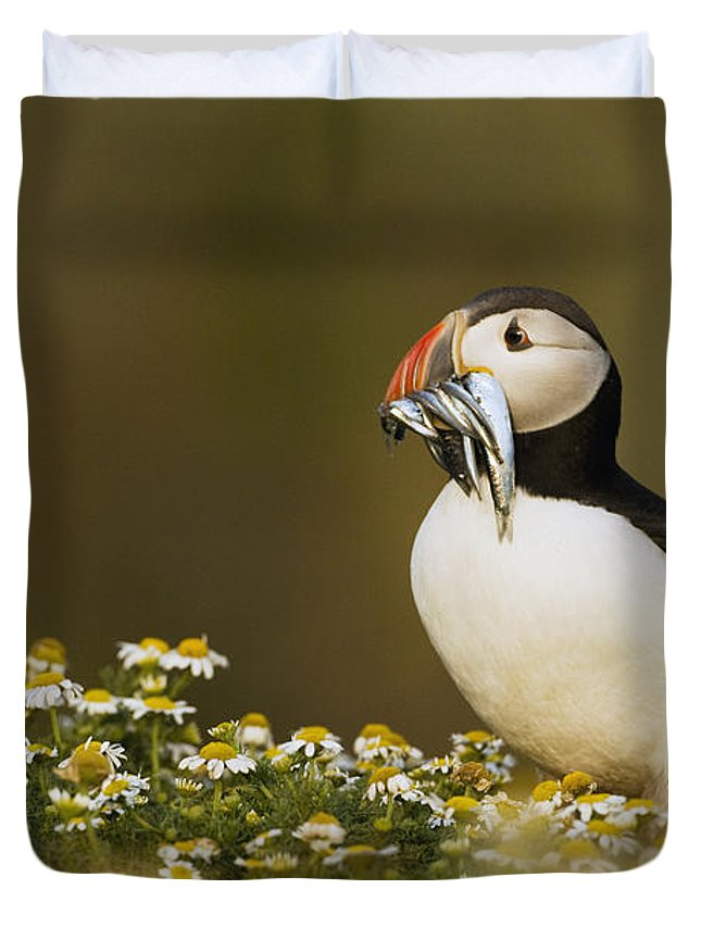 Sebastian Kennerknecht Duvet Cover featuring the photograph Atlantic Puffin Carrying Fish Skomer by Sebastian Kennerknecht
