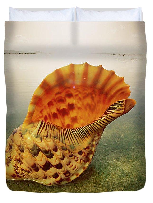 Ai Duvet Cover featuring the photograph Atlantic Trumpet Triton Shell by Jean-Paul Ferrero