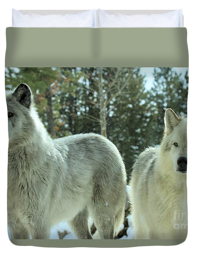 Montana Wolves Duvet Cover featuring the photograph Attention Grabber by Adam Jewell