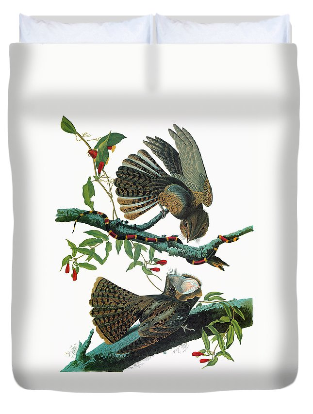 1827 Duvet Cover featuring the painting Audubon Chuck-will's Widow by Granger