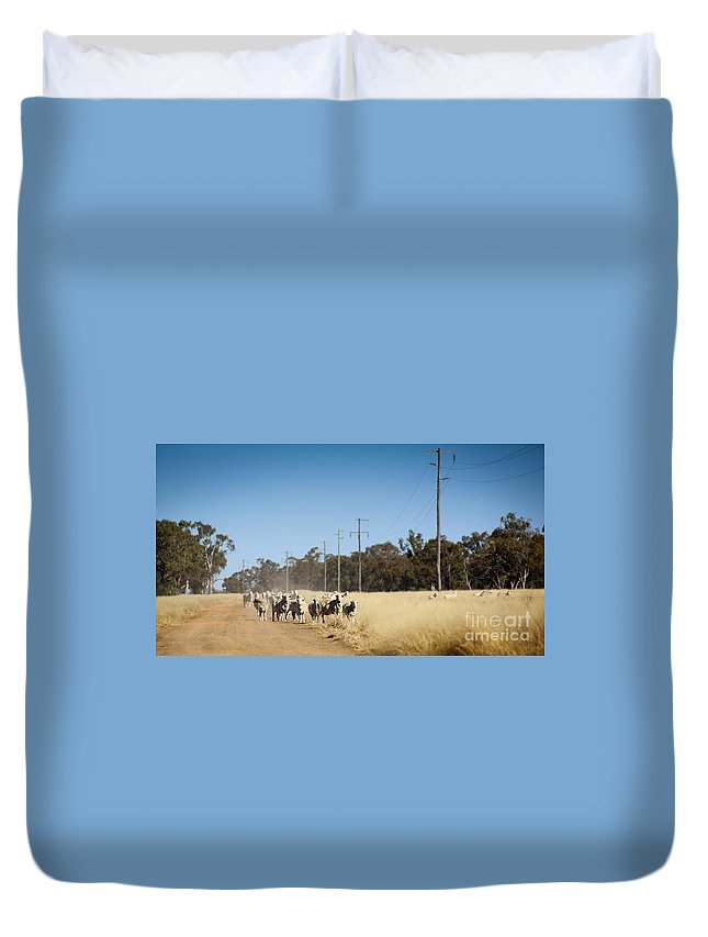 Farm Duvet Cover featuring the photograph Australian Sheep by Tim Hester