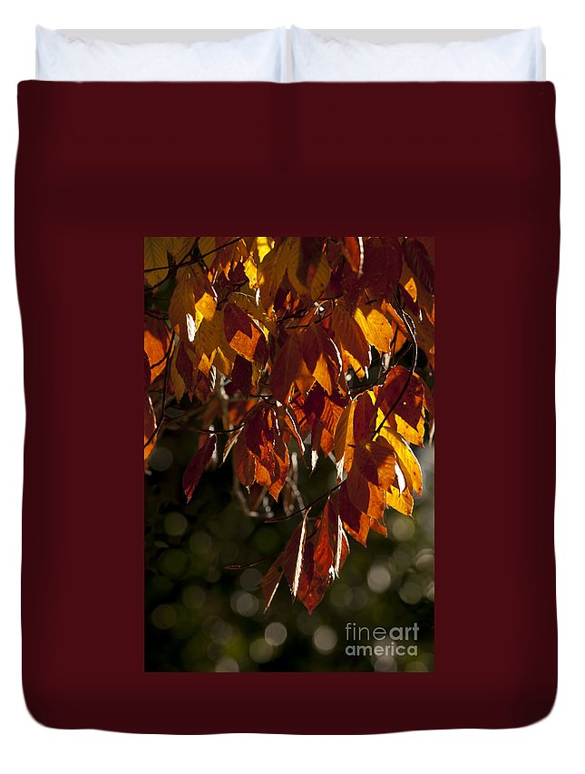 2013 Duvet Cover featuring the photograph Autumn Beech Leaves by Lauren Brice