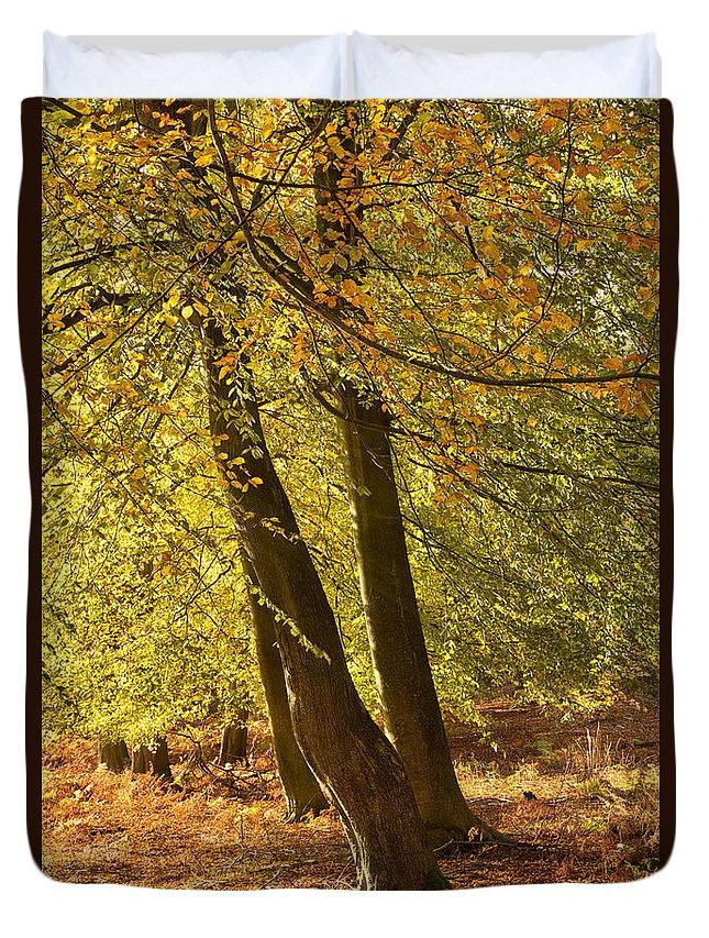 Autumn Forest Duvet Cover featuring the photograph Autumn Beeches by Ann Garrett