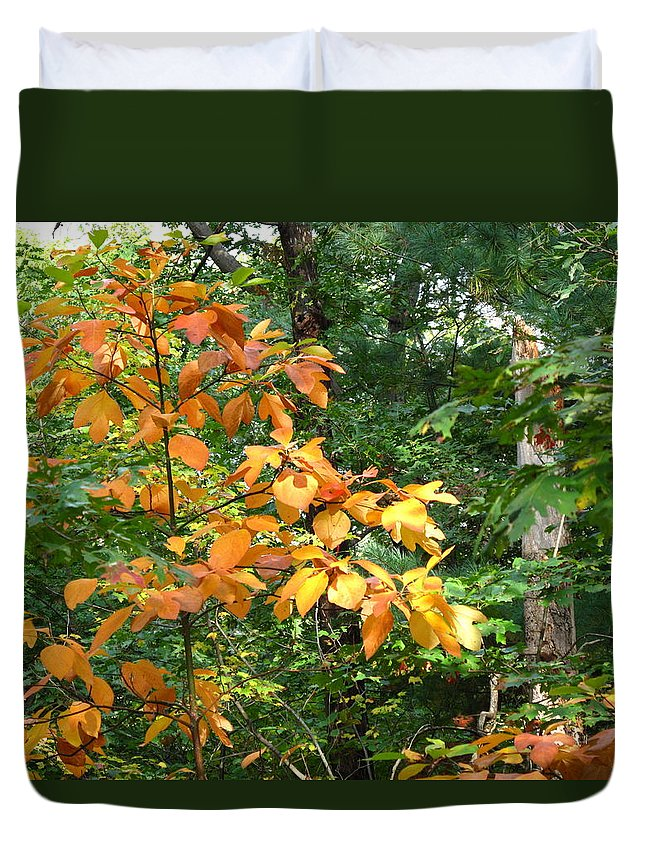 Leaves Duvet Cover featuring the photograph Autumn Begins At Breakheart Reservation by Barbara McDevitt
