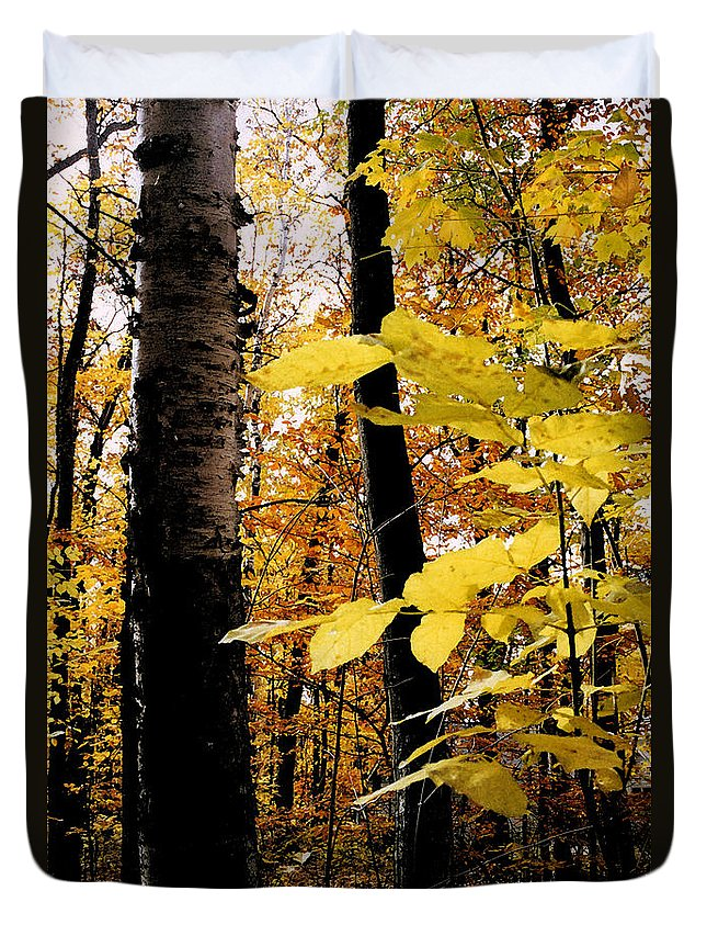 Green Duvet Cover featuring the photograph Autumn Birch Trees by Michelle Calkins