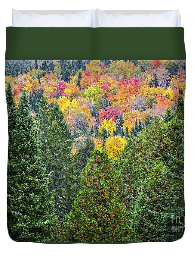 Fall Duvet Cover featuring the photograph Autumn Forest by Alan L Graham