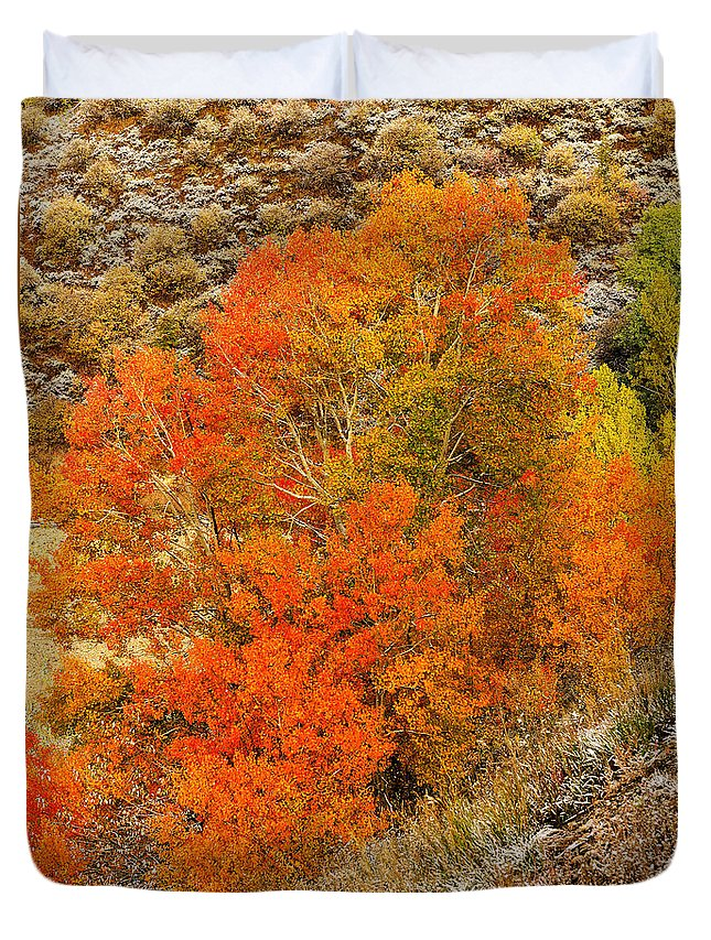 Autumn Duvet Cover featuring the photograph Autumn Glow by Greg Norrell