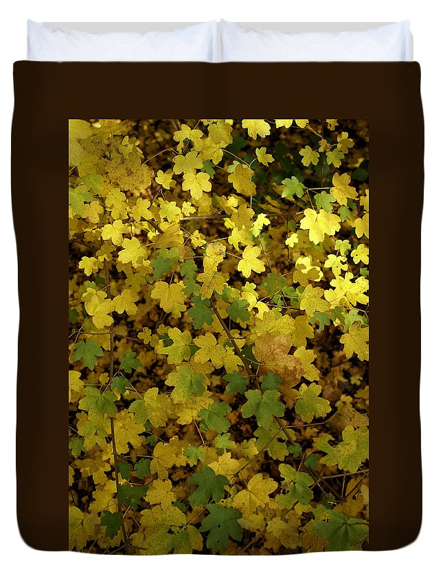 Autumn Duvet Cover featuring the photograph Autumn Leaves 091 by Ron Harpham