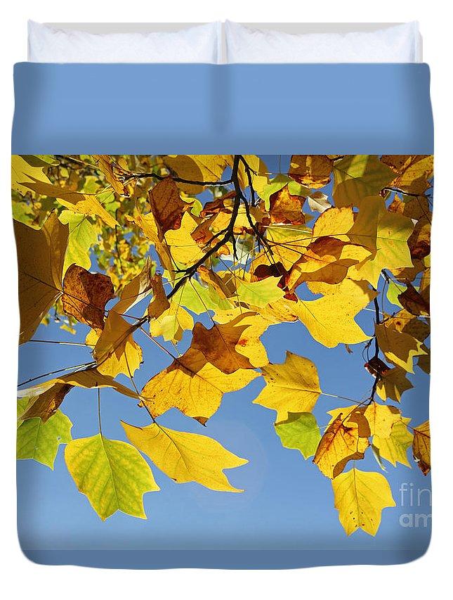 Autumn Leaves Of The Tulip Tree Duvet Cover featuring the photograph Autumn Leaves Of The Tulip Tree by Julia Gavin