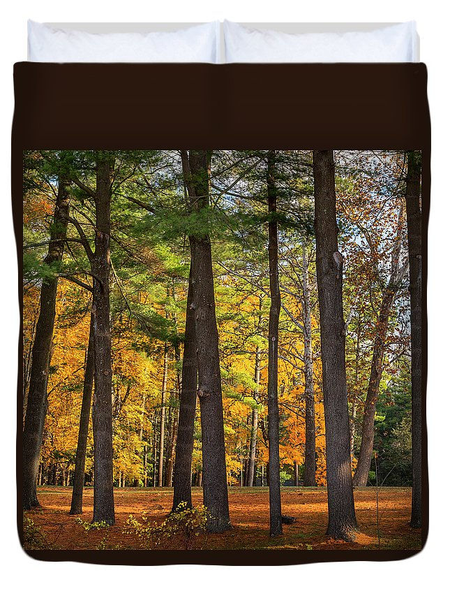 New England Landscape Duvet Cover featuring the photograph Autumn Pines Square by Bill Wakeley