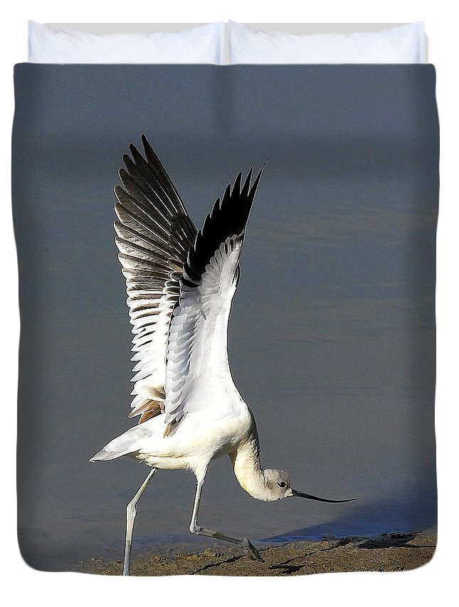 American Avocet Duvet Cover featuring the photograph Avocet Dancer by Timothy Flanigan