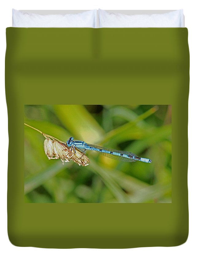 Cotswolds Duvet Cover featuring the photograph Azure Damselfly by Tony Murtagh