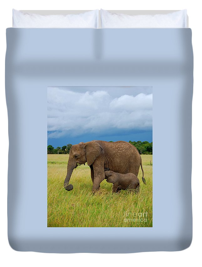 Baby Elephant Duvet Cover featuring the photograph Baby Elaphant by Charuhas Images