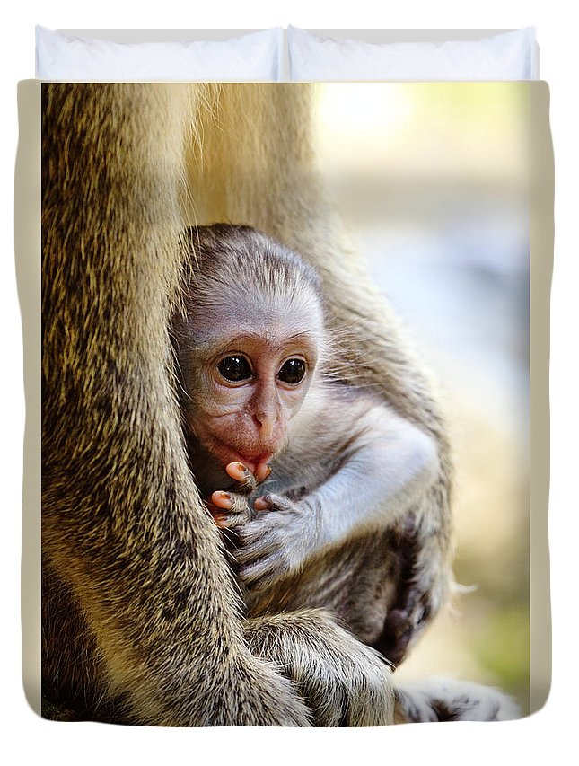 Nature Duvet Cover featuring the photograph Baby Green Monkey - Barbados by Matteo Colombo