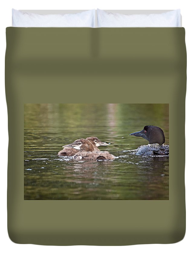 Loon Duvet Cover featuring the photograph Baby Loons And Mom by Donna Doherty