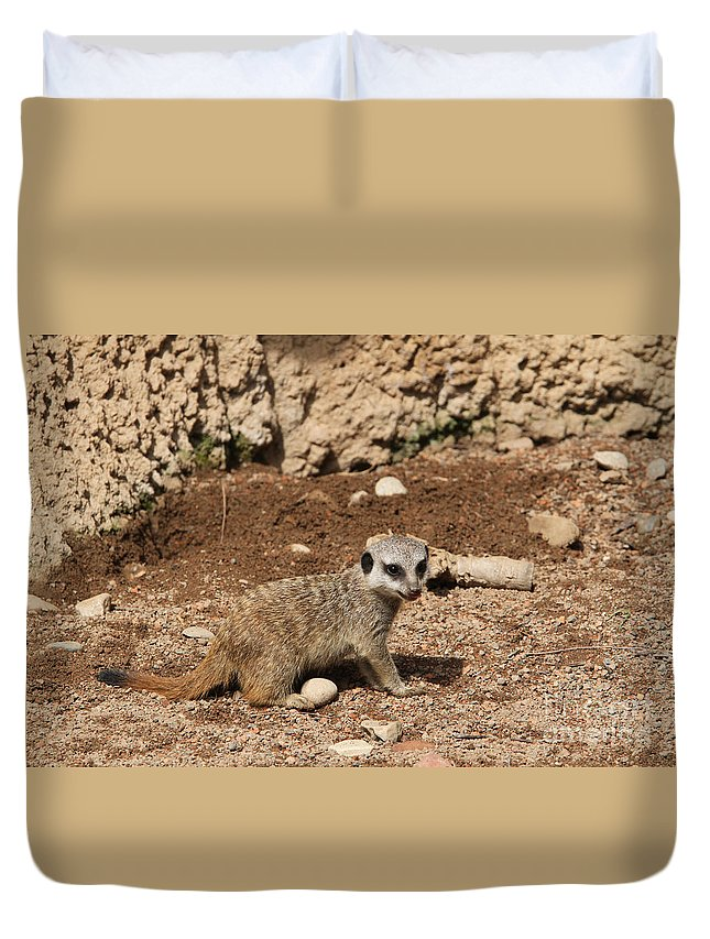 Meerkat Duvet Cover featuring the photograph Baby Meerkat by Judy Whitton