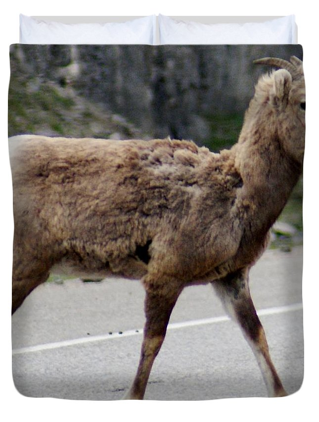 Goat Duvet Cover featuring the photograph Baby Mountan Goat Crossing Road by Gail Matthews