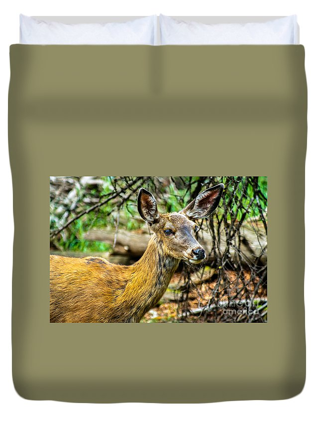 Blacked-tail Duvet Cover featuring the photograph Back-tail Doe by Robert Bales