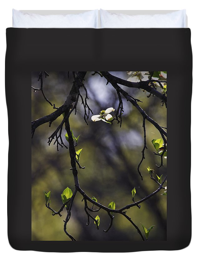 Dogwood Duvet Cover featuring the photograph Backlit Dogwood Blossom In Natural Frame by Michael Dougherty