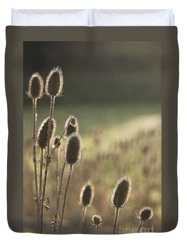 Anne Gilbert Duvet Cover featuring the photograph Backlit Teasel by Anne Gilbert
