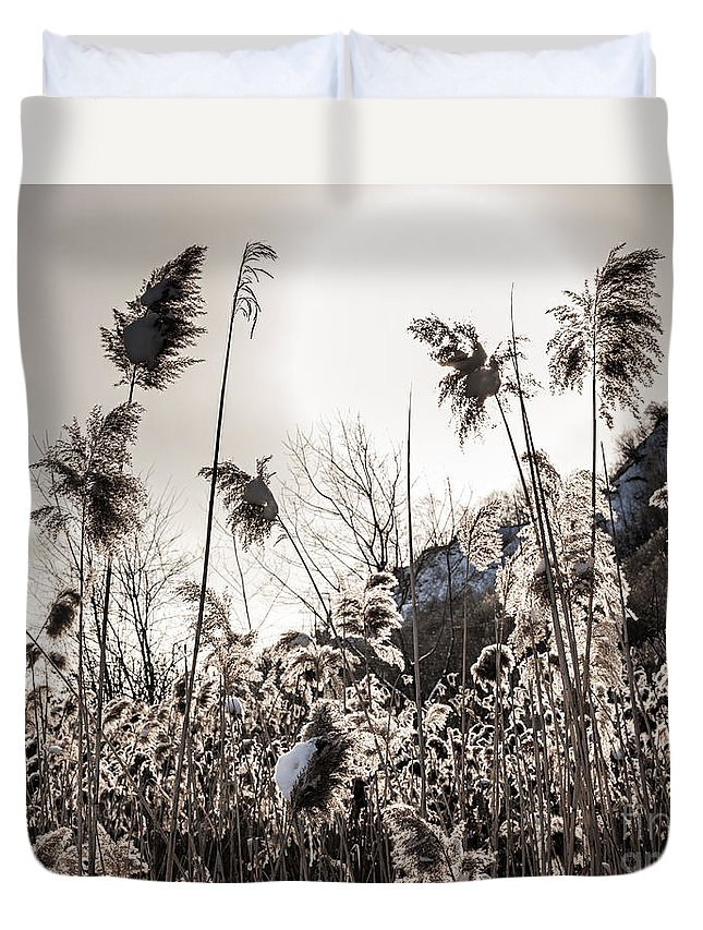 Reeds Duvet Cover featuring the photograph Backlit Winter Reeds by Elena Elisseeva