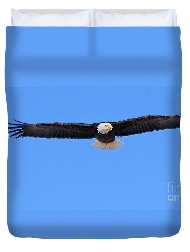 Bald Eagle Duvet Cover featuring the photograph Bald Eagle 3768 by Jack Schultz