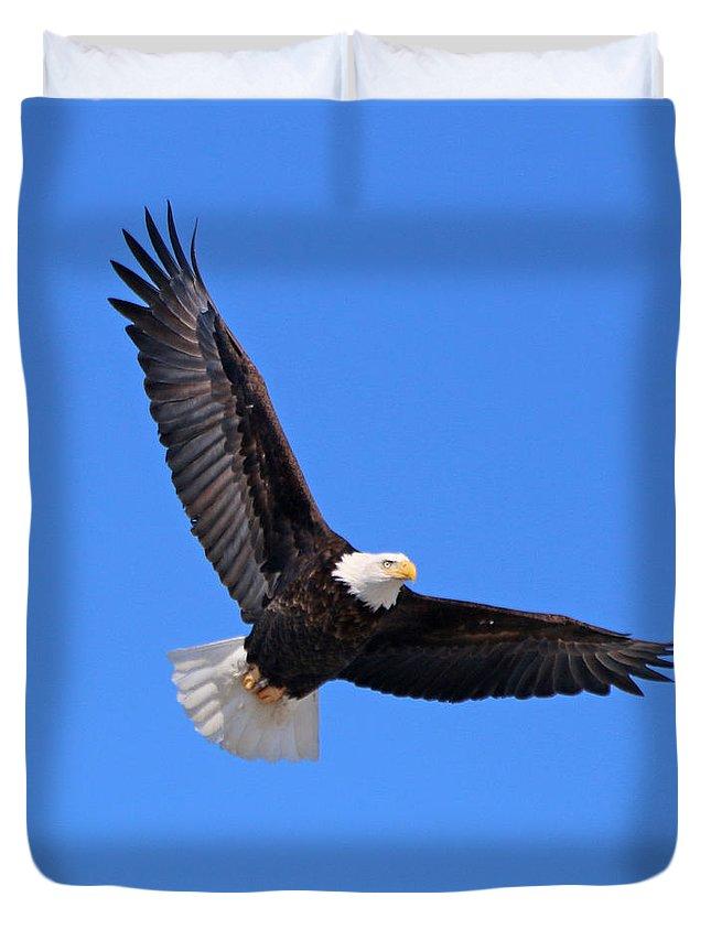 Bald Eagle Duvet Cover featuring the photograph Bald Eagle 3773 by Jack Schultz