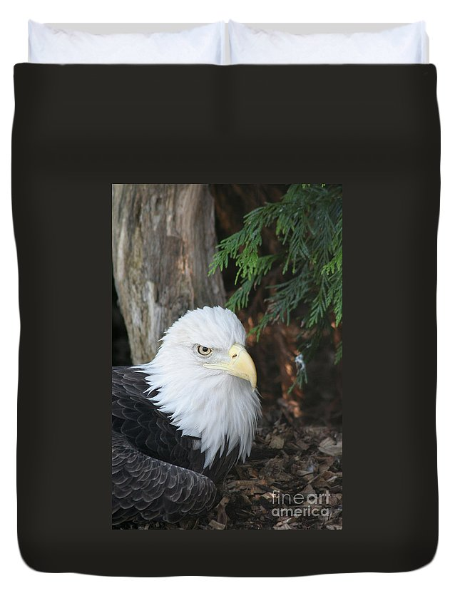 Bald Eagle Duvet Cover featuring the photograph Bald Eagle #3 by Judy Whitton