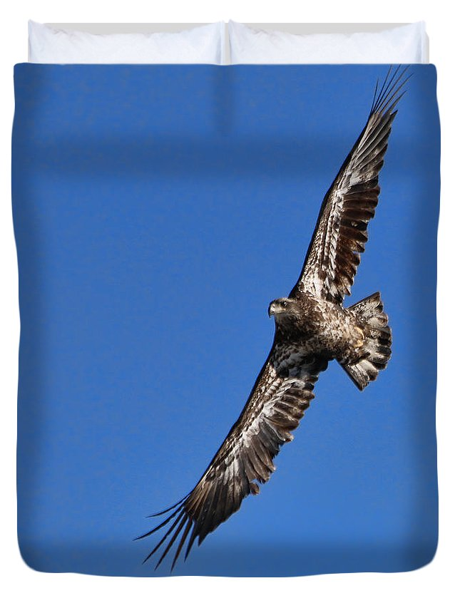 Bald Eagle Duvet Cover featuring the photograph Bald Eagle 5046 by Jack Schultz