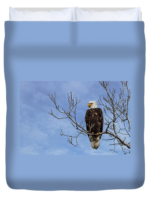 Bald Eagle Duvet Cover featuring the photograph Bald Eagle by Aaron J Groen