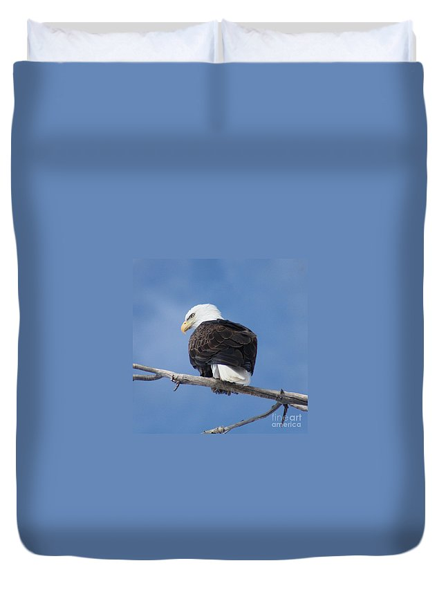 Bald Eagle Duvet Cover featuring the photograph Bald Eagle by Brandi Maher