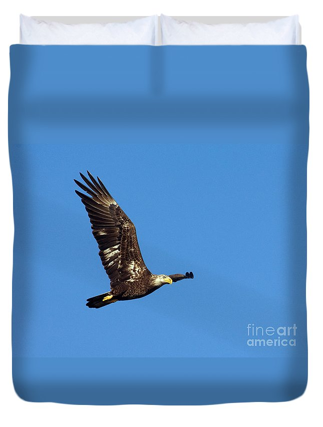 Bald Eagle Duvet Cover featuring the photograph Bald Eagle In Flight by Anthony Mercieca