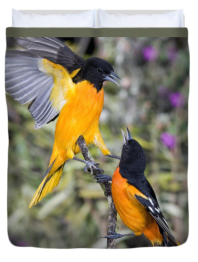 Animal Duvet Cover featuring the photograph Baltimore Orioles by Anthony Mercieca