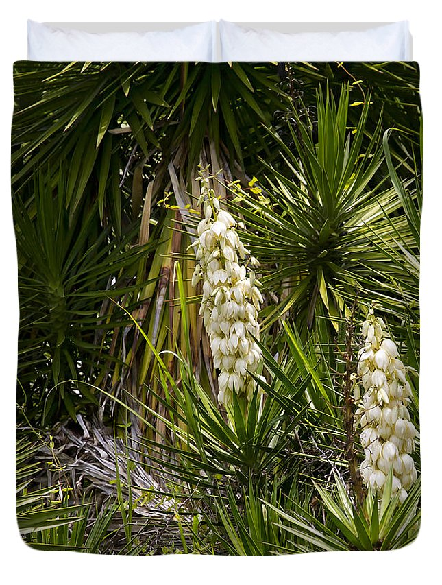 Yucca Duvet Cover featuring the photograph Banana Yucca  #0533 by J L Woody Wooden