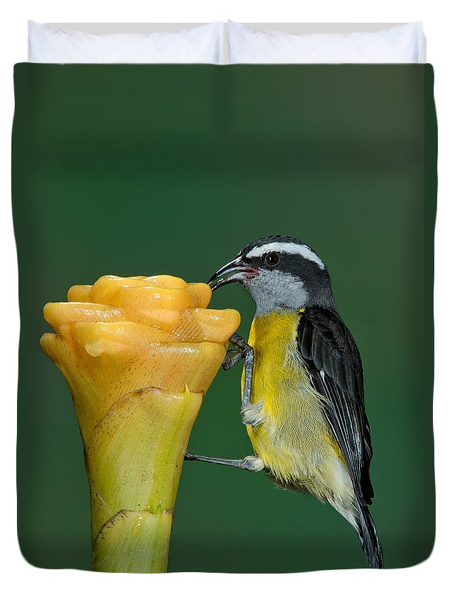 Bananaquit Duvet Cover featuring the photograph Bananaquit Feeding by Anthony Mercieca