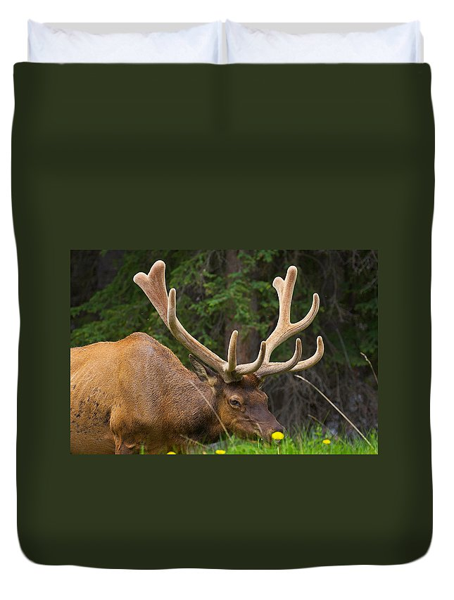 Elk Duvet Cover featuring the photograph Banff Elk by Stuart Litoff